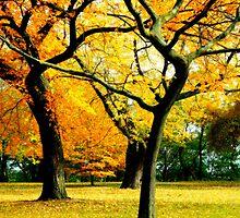 Autumn © by Dawn M. Becker