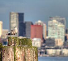 Sound Seagull by Sue Morgan