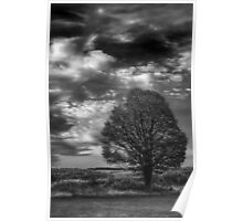 A Tree, All Alone Poster