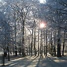 Forest in Frost 1 by shiro