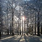 Forest in Frost 2 by shiro