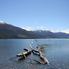 Boundary Creek - New Zealand by Nicola Barnard