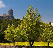 Roque Nublo in spring by Lex Thoonen