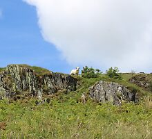 LAMB ON A HILL by JDempzz