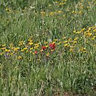 LOVE MOUNTAIN WILDFLOWERS by Brenda Planchon