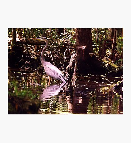 Governor Bird Artistic Photograph by Shannon Sears Photographic Print