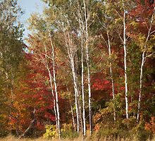Painted Fall Colors by Thomas Young