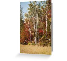 Painted Fall Colors Greeting Card