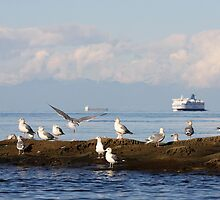Traveling the Strait of Georgia  by TerrillWelch