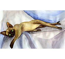 Devon Rex Cat Portrait Photographic Print