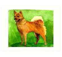Finnish Spitz Dog  Art Print