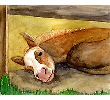 Palomino Quarter Horse Foal Photographic Print