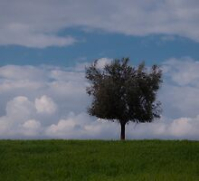 Lonely olive tree by jhawa