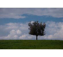 Lonely olive tree Photographic Print