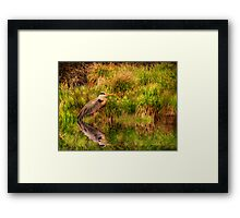 Waiting to Fly Framed Print
