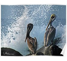 Pelicans 2, Troncones Point, Mexico Poster