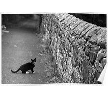 Cat in Scotland  Poster