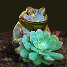 Happy Frog by heatherfriedman