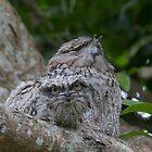 The Indian Head Waggle by byronbackyard