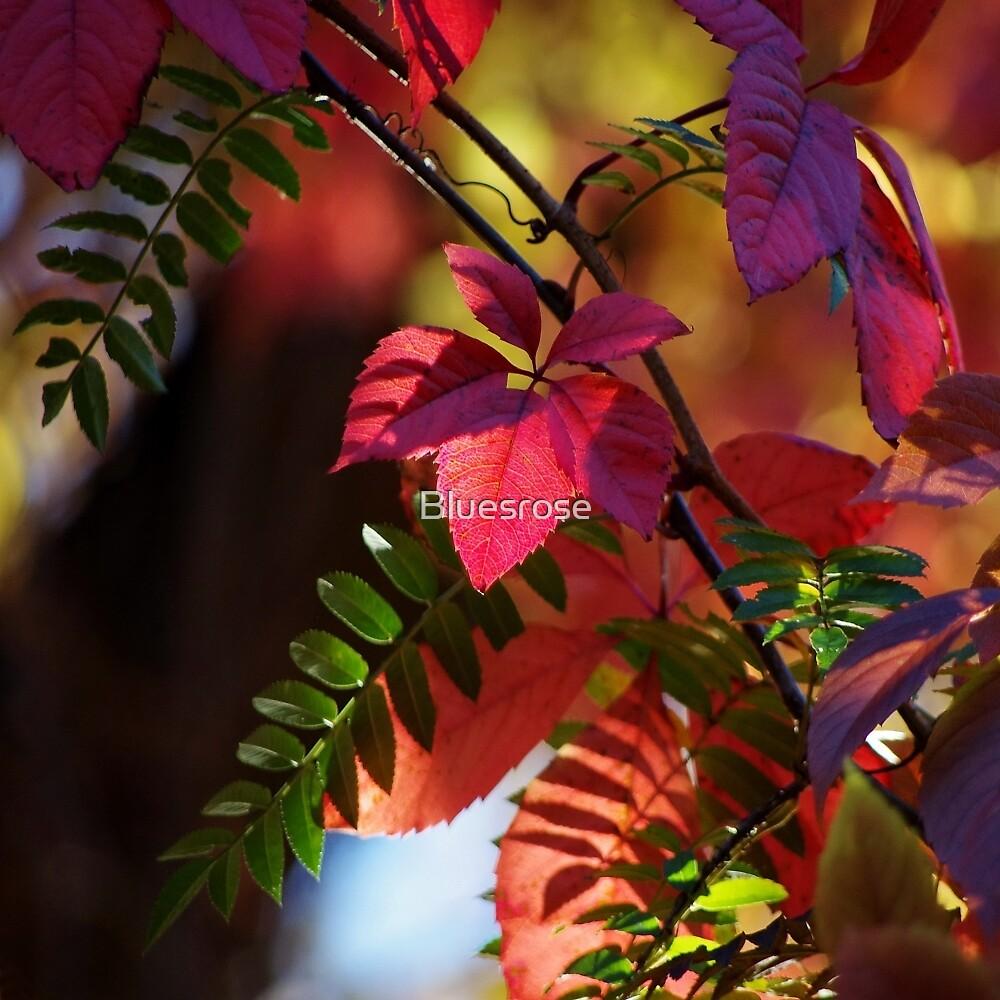 October by Bluesrose