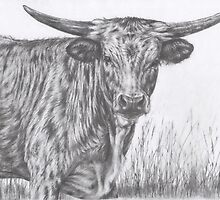 Young Texas Longhorn by Margaret Stockdale