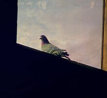 Pigeon In The Hay Loft Window by trueblvr
