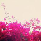 Rainy Day Bloom ~ by Emma  Wertheim