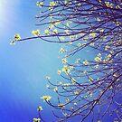 Branching Out ~ by Emma  Wertheim