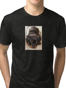 Cute Rottweiler Puppy With Head On Paws Tri-blend T-Shirt