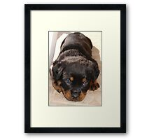 Cute Rottweiler Puppy With Head On Paws Framed Print