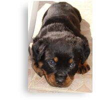 Cute Rottweiler Puppy With Head On Paws Canvas Print