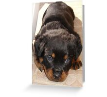 Cute Rottweiler Puppy With Head On Paws Greeting Card
