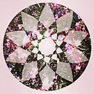 Flower Star ~ by Emma  Wertheim