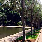 Hyde Park Sydney by allabouther