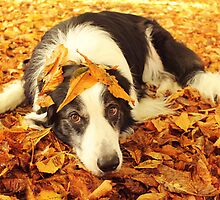 Autumn Leaves by meg price