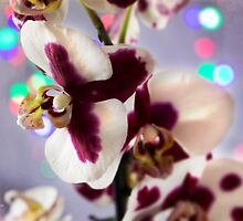 Blueberry Orchid by Amar-Images