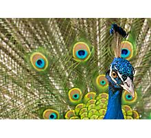 Indian Peafowl Photographic Print