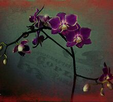 Love is a flower you have to let grow by Amar-Images