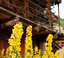 Wooden Farm Building with Foreground Flowers by jojobob