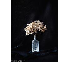 Dried hydrangeas Photographic Print