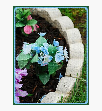 Flower Bed Photographic Print