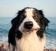 Barney: A Border Collie by meg price