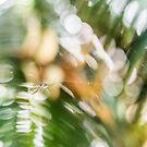 Spider in the Garden by Danielle Espin