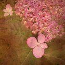 Woodland Hydrangea by Kathilee