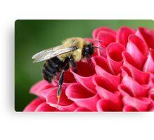 Bumblebee 1 Canvas Print