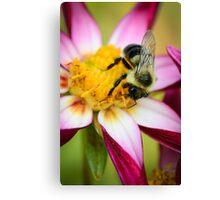 Bumblebee 2 Canvas Print