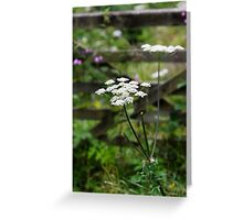 North Wales hedgerow Greeting Card