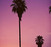 California Palms iPad by enlightenedscrp