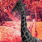 Giraffes In Red by korokstudios