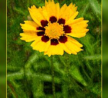 Yellow Flower with Red Center by Crystal Wightman